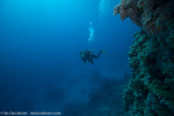 BD-120421-St-Johns-5969-Homo-sapiens.-Linnaeus.-1758-[Diver].jpg